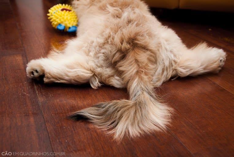5 Tipos De Displasia Coxo Femural Em Cachorros Mascotemascote